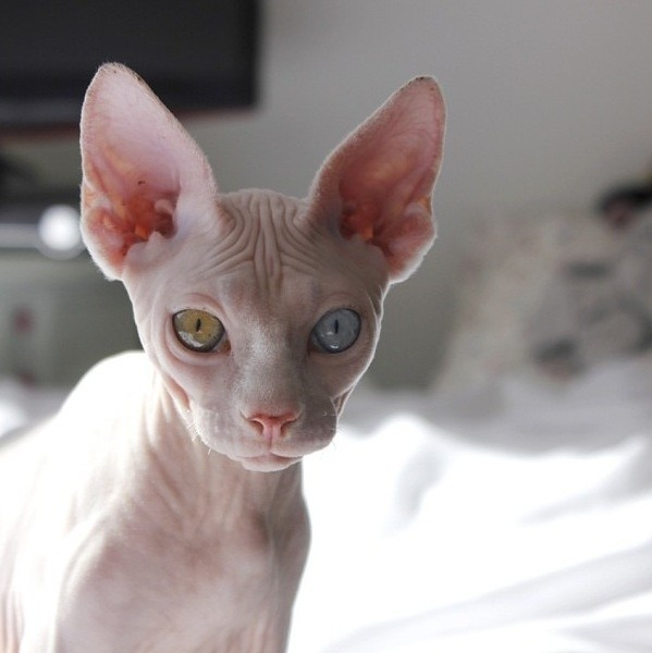 Top 15 Hairless And Creepy Looking Animals Of Their Kind