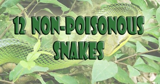 snakes-are-scary-since-they-contain-deadly-venom-but-these-12-non-poisonous-snakes-will-make-you-think-again